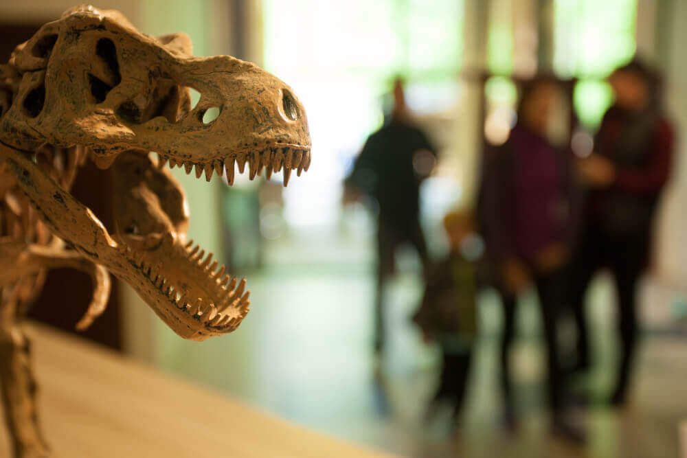 Olimpiada Dinozaurilor
